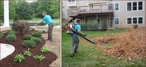 Mulch addition and Leaf removal
